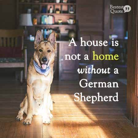 A house is not a home without a German Shepherd.