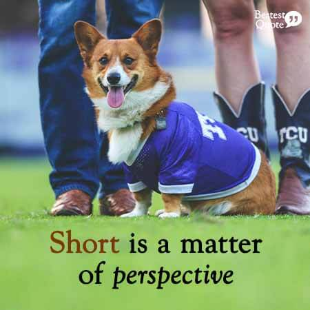 Short is a matter of perspective - Corgi Quotes