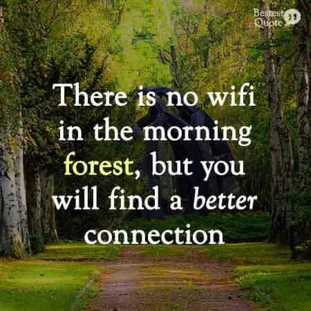 There is no wifi in the morning forest, but you will find a better connection.