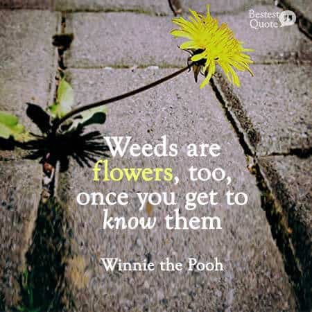 Weeds are flowers too once you get to know them. Winnie the Pooh