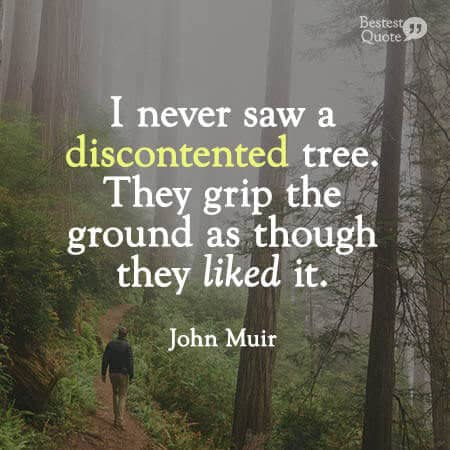 """""""I never saw a discontented tree. They grip the ground as though they liked it, and though fast rooted they travel about as far as we do."""" John Muir"""