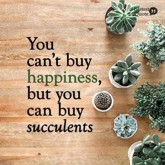 """You can't buy happiness, but you can buy succulents"""